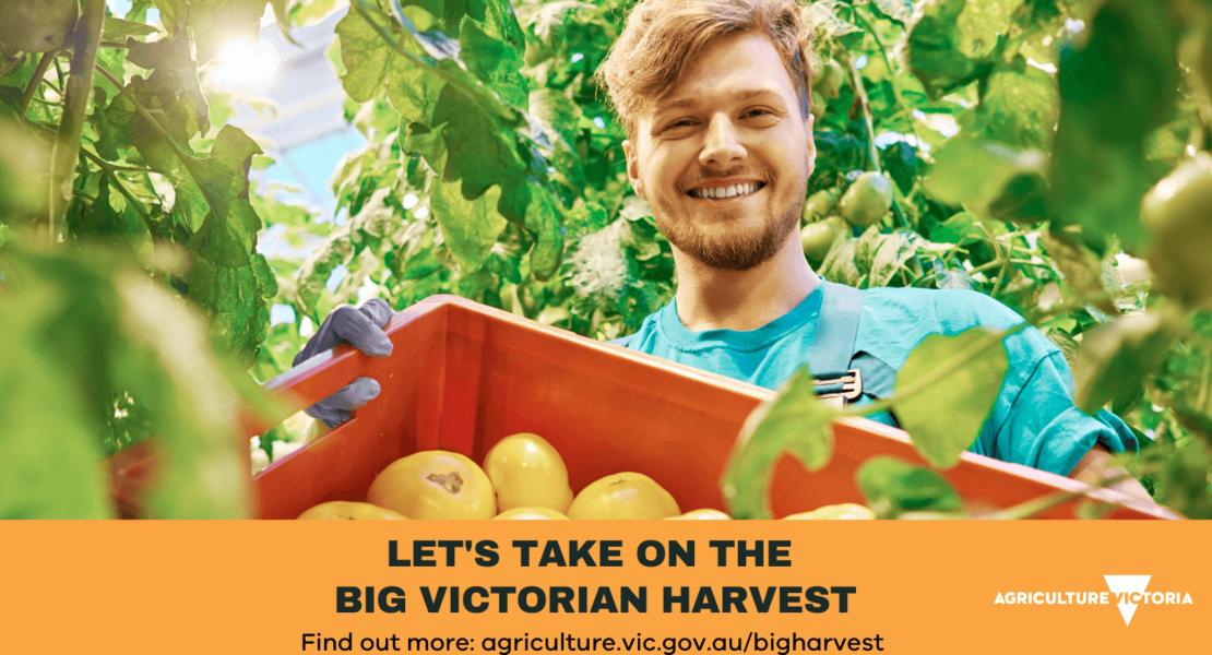 Register for the Big Victorian Harvest and Receive Bonus $2,430