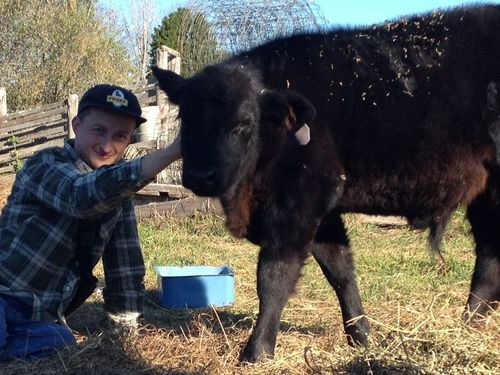 Farmhand Internship Beef Cattle