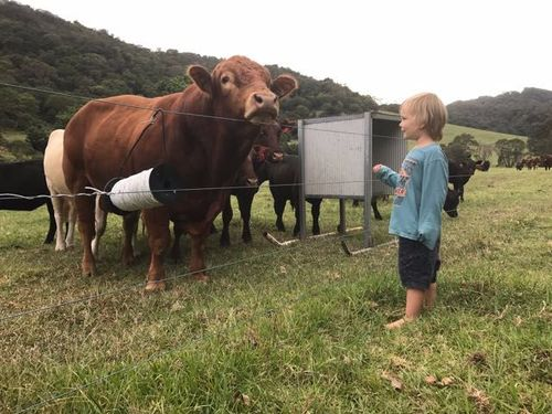 Farm Animal Caring, Gardening, Cleaning Work (2nd Year Visa Eligible)