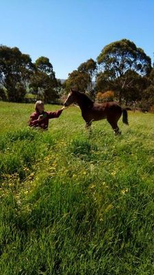 Horse Rider / Stablehand