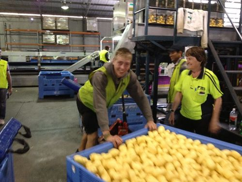$23.66 Per Hour At Potato Farm, Counts Towards 88 Visa