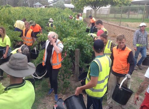 25 Backpackers Needed For Grape Picking Season