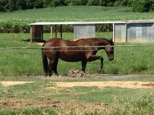 Farm /horse Help