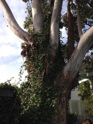 Tree Climber/arborist