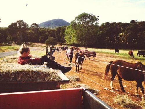 Riding School, Petting Zoos, Farm Work