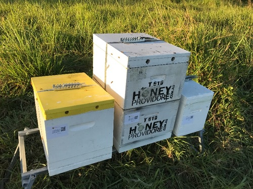 Honey Packer / Beekeeping Assistant