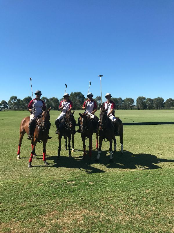 Polo Groom Wanted Richmond Nsw