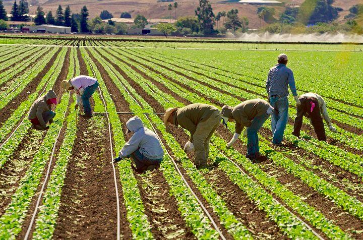 General Farm Labourer