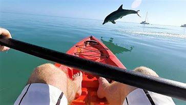 Live And Work On A Paradise Resort With The Dolphins