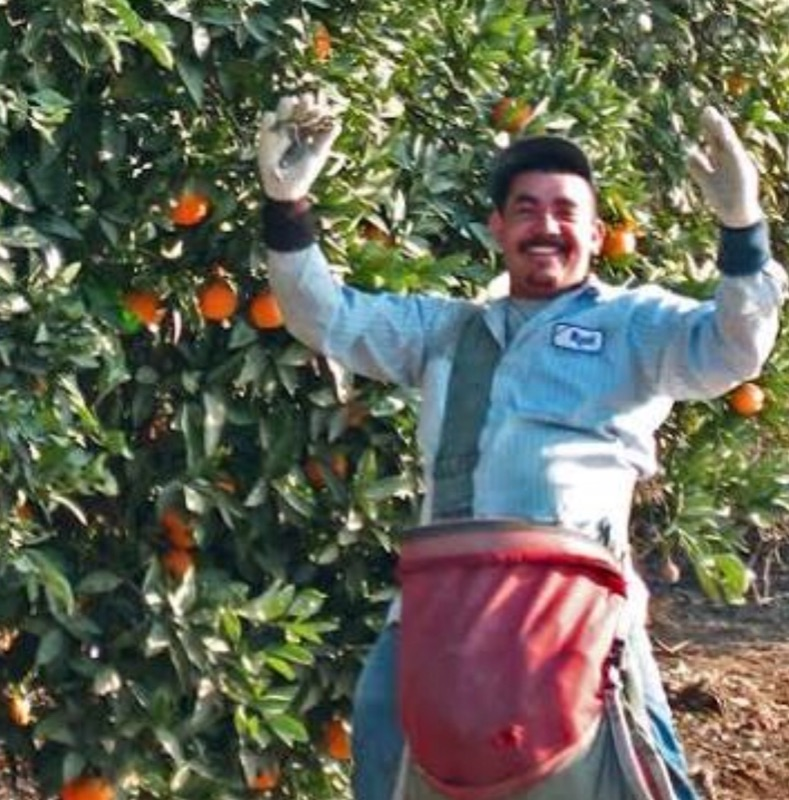 Fruit Picker (orange)