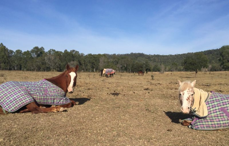 Family Horse Property - Live In Help