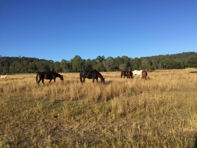Family Horse Property - Farmwork