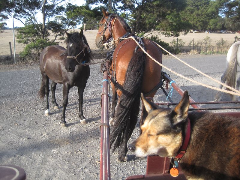 Work With Horses Volunteer (unpaid) Live In-everything Supplied