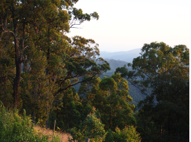Volunteer Work For Two Weeks Staying In World Heritage Wilderness Area In Exchange For Accommodation