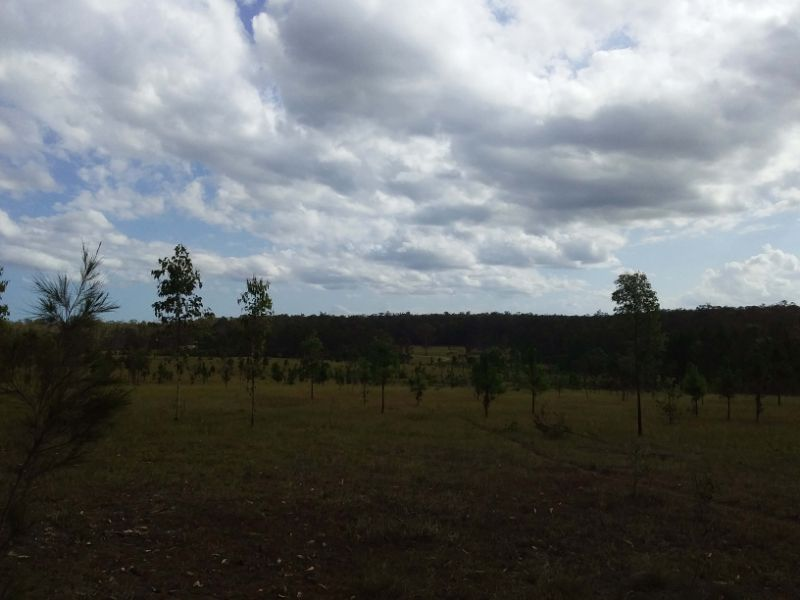 Volunteer Koala Habitat Project