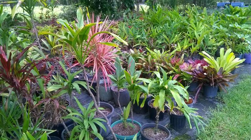 Visa Eligible Plant Nursery Structural Work