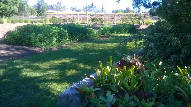 Plant Nursery Facilities Builder / Constructor