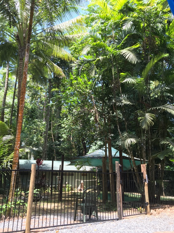 Rewild And Reearth In The Daintree Rainforest - Woofers