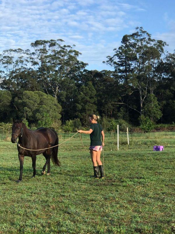 Horse Caretaker And Trainer