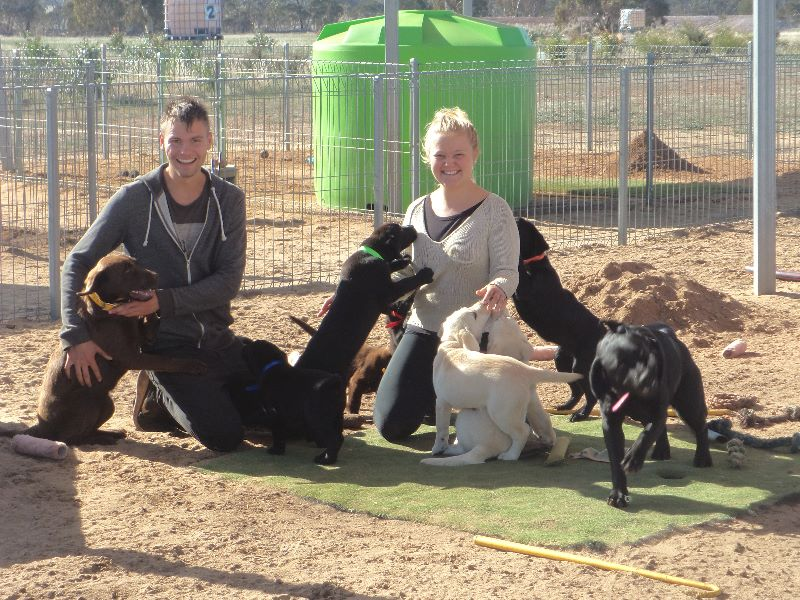 Working With Dogs = Backpackers Wanted