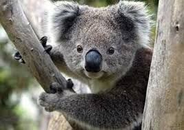Lovely Au Pair Male Or Female Needed In Fig Tree Pocket, Brisbane - Start End Of July