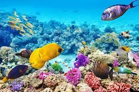 Exciting Au Pair Role - Nth Qld, Explore Barrier Reef & Whitsundays- Start Now!