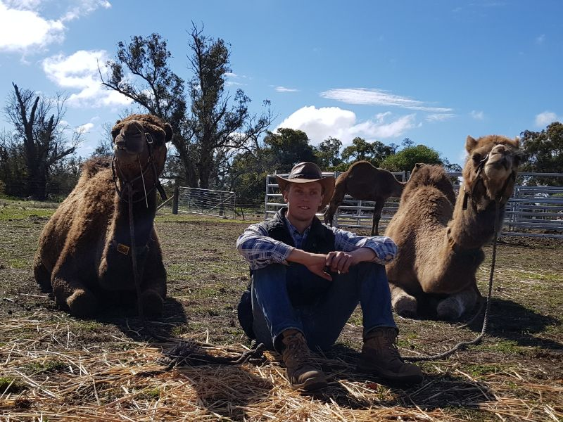 Farm Hand On Camel Dairy In The Perth Hills (wa)