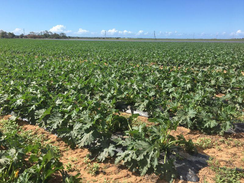 Farm Work Available Now
