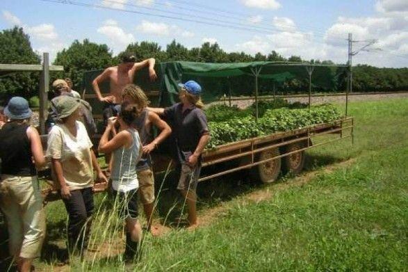 Bundaberg Hourly Packing Farm Job