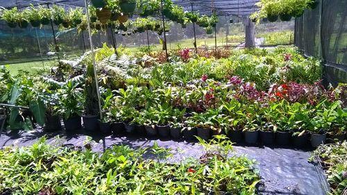 Farm Hand / Plant Nursery Hand