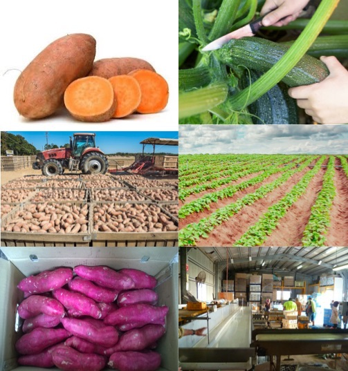 Vegs And Fruits Oz Farm Great Job Opportunity And Great Accommodation. (offer 2nd/3rd Year Visa)