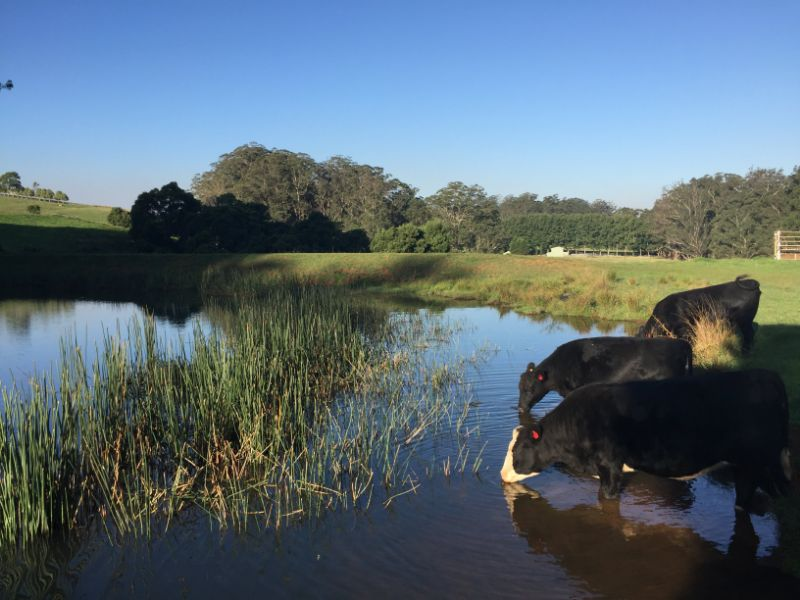 Farm Hand Wanted For Wildes Meadow Nsw