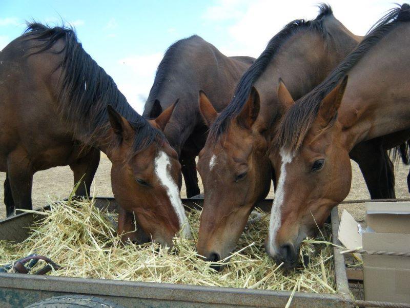 Horse Rider/stablehand