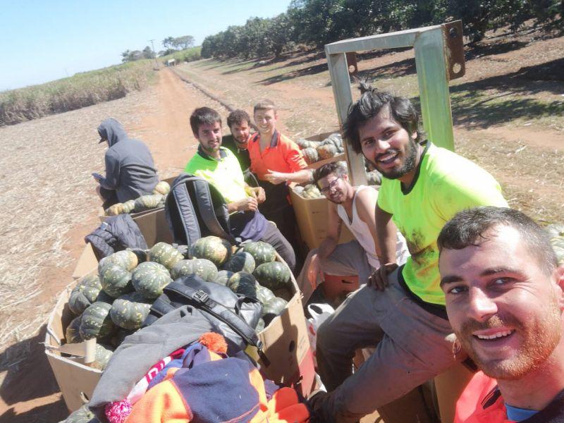 Farm Work Available In Bundaberg
