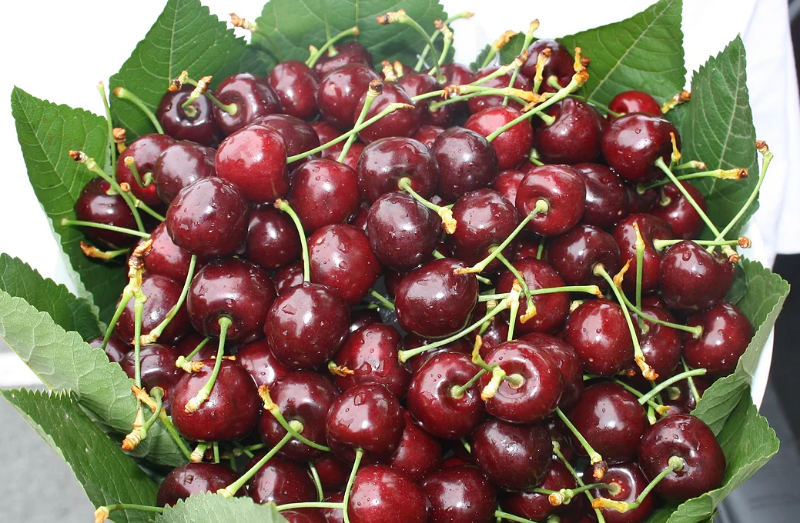 Wanted: Cherry Pickers For Upcoming Season Southern Tasmania