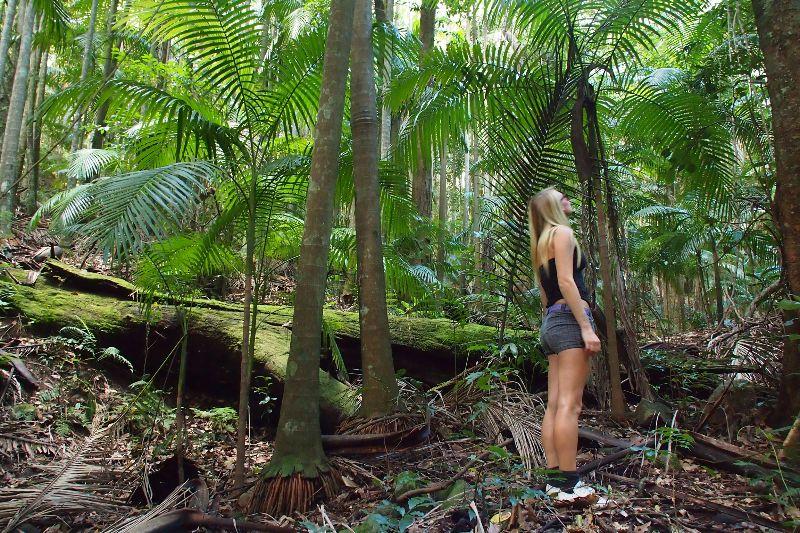 Rainforest Permaculture Help Exchange.