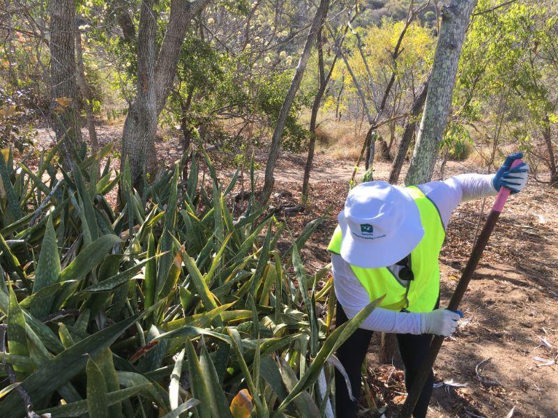 Beach Scrub Conservation Field Volunteer
