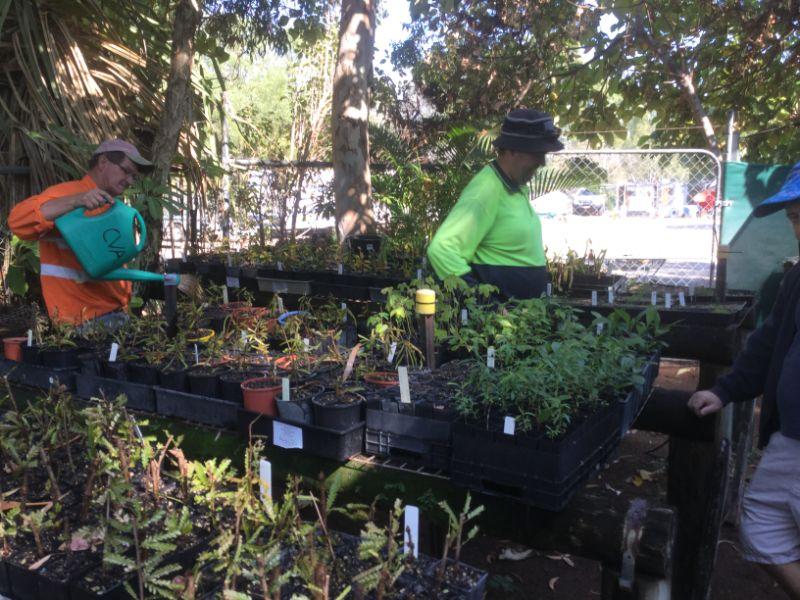 Native Plant Nursery Volunteers