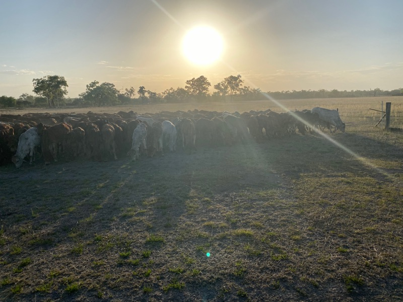 Help For Cattle Station