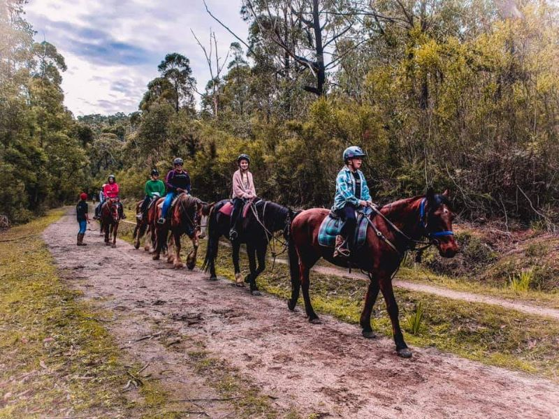 Volunteer At Ryders Horse Riding Tours