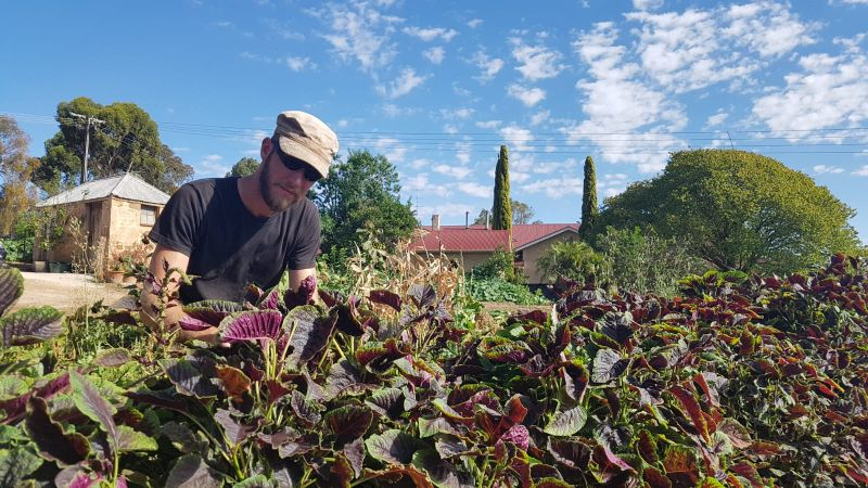Hospitality / Front Of House / Chef / Permaculture Farming