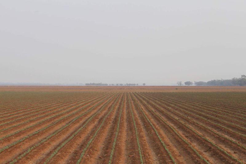 Lead Farming Hand