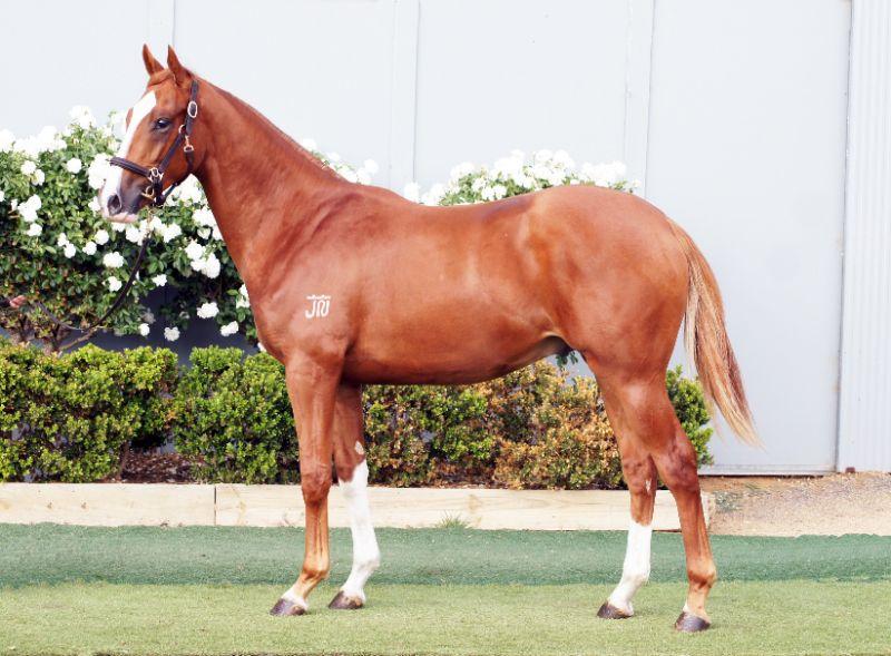 Experienced Thoroughbred Horse Handler