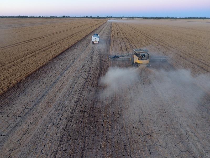 Wheat Harvest 2020