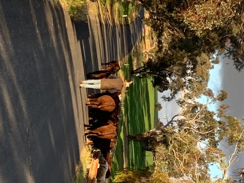 Farmhouse Helpers