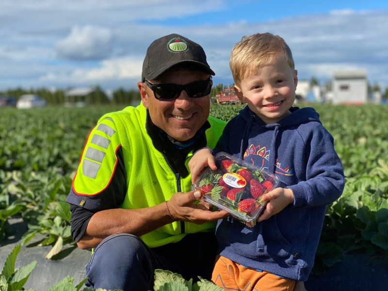 Berry Pickers Required For Largest Farm In Caboolture