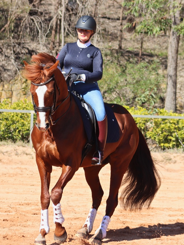 Dressage Groom