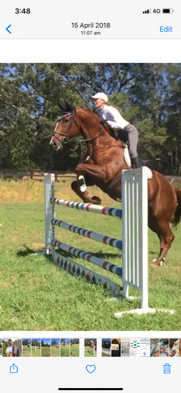 Working Pupil- Show Jumping