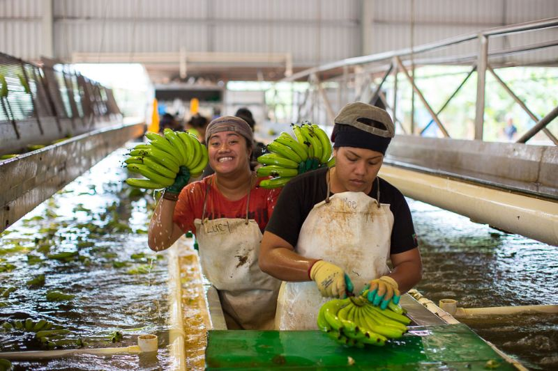 Packing Shed Worker - Qualifies For 2nd And 3rd Working Holiday Visa