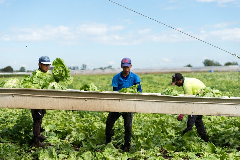 Harvesting, Planting And Packing Jobs Available